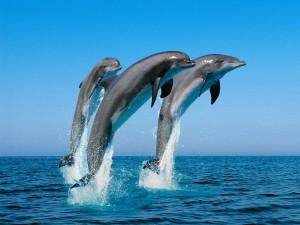 dolphinsleft